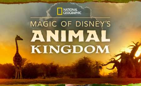 Magic of the Animal Kingdom
