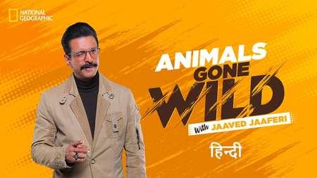 Animals Gone Wild with Jaaved Jaaferi