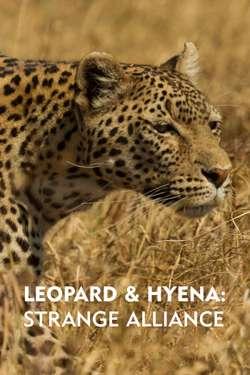 Leopard & Hyena: Strange Alliance